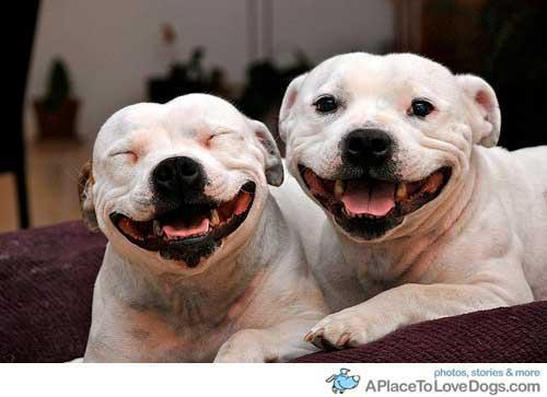 smiley dogs